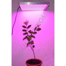 """LED grow панель мощностью 48 Вт - 720 Вт """"Поллукс"""" для выращивания рассады, цветов, комнатных растений, гарантийное обслуживание - 1 год"""
