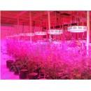 Светодиодные лампы для растений (фитолампы)